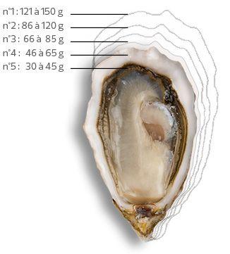 Le poids d'une huître et son calibre